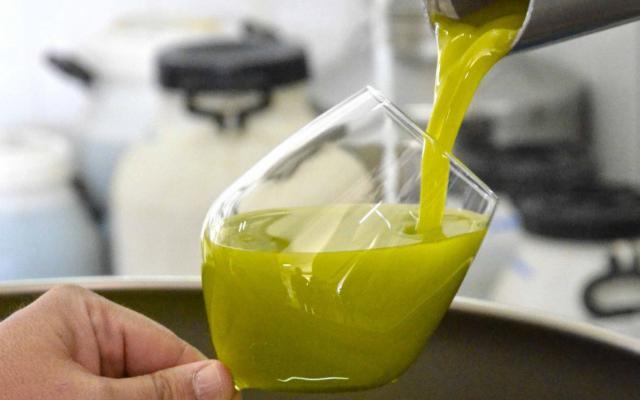 Olio d'oliva di Monreale tra i migliori del mondo per la gui